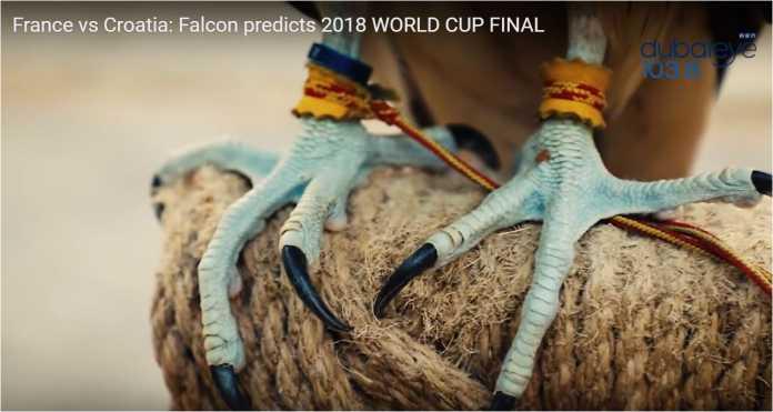 Unta Shaheen dan Farah Elang sudah kembali demi memberi prediksi mereka untuk laga final Piala Dunia 2018 antara Prancis vs Kroasia, hari Minggu nanti.