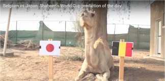 Shaheen Unta kembali memberi prediksi yang nyeleneh, memilih Jepang muncul sebagai pemenang atas Belgia pada partai 16 besar Piala Dunia 2018, Selasa dinihari.