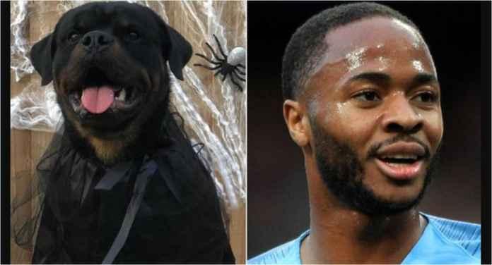 Hobi Baru Pemain Liga Inggris: Pelihara Anjing Mahal Anti Maling