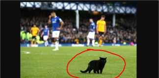 Everton Kalah Gara-gara Kucing Hitam Masuk Lapangan